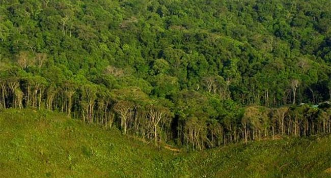 Jungle_Forest_189565383
