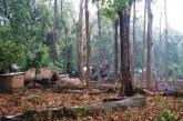 कपिलवस्तुमा दश हजार हेक्टर वन अतिक्रमण