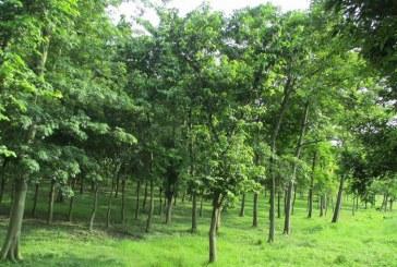 पूर्वाधार निर्माणमा जुट्यो सामुदायिक वन