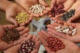 Quality seed and its importance in agriculture