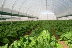 Tunnel farming