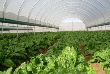 Tunnel farming